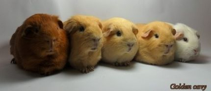 http://www.goldencavy.com/images/thumbnails/images-home-goldencavy2-430x185.jpg