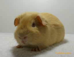 http://goldencavy.com/images/Nicki.jpg
